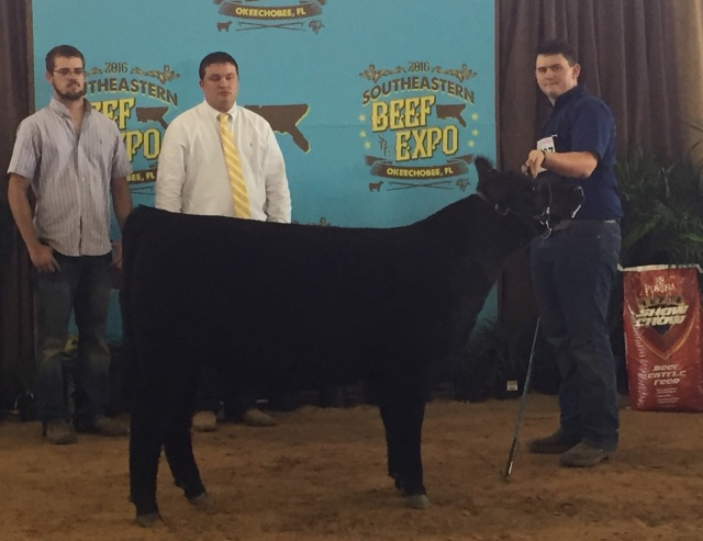Fifth Overall Heifer 2016 Beef Expo Shown by Ben Hoffner